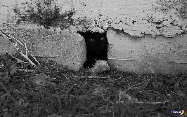 Животный мир - 202 - Они смотрят!