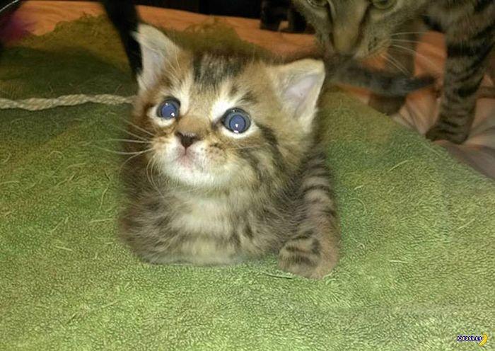 Котенок с двумя лапками и его счастливая жизнь