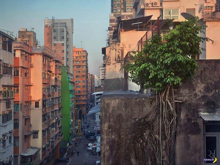 На камнях растут деревья