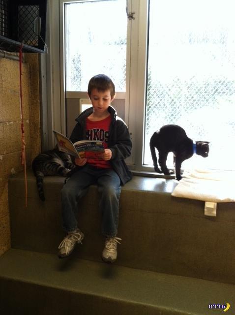 Дети читают кошкам в приюте