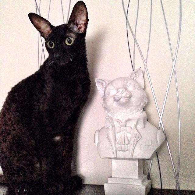 Всемирный день кошек 1 марта
