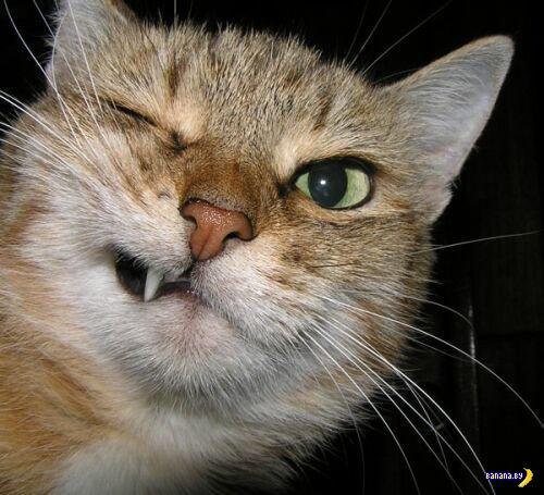 Как при помощи кота дистанционно выключить свет?