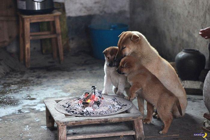Щенки греются в Китае