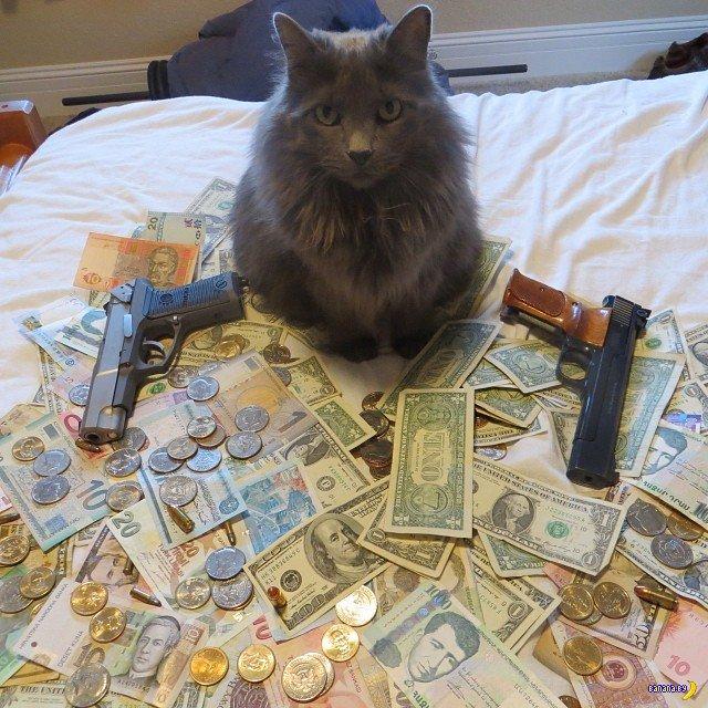 Богатые коты из Интернета