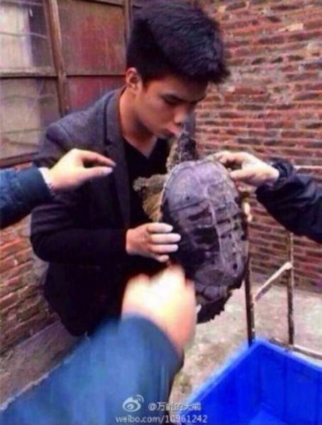 Поцеловал черепаху