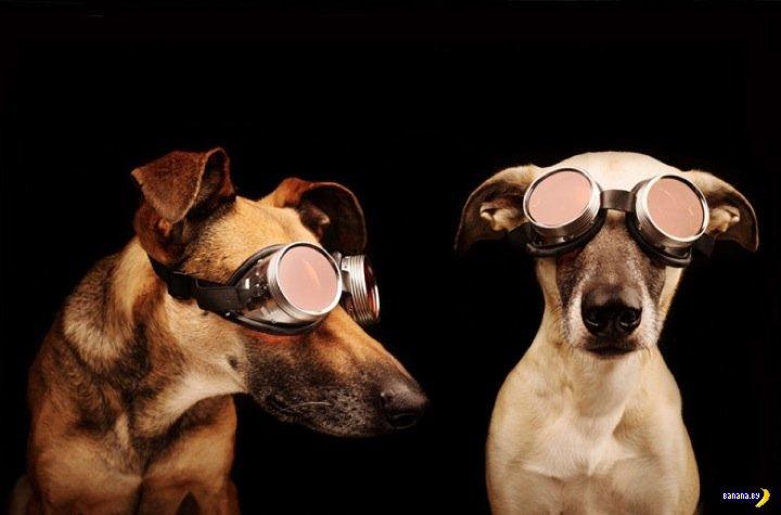 Портреты собакенов