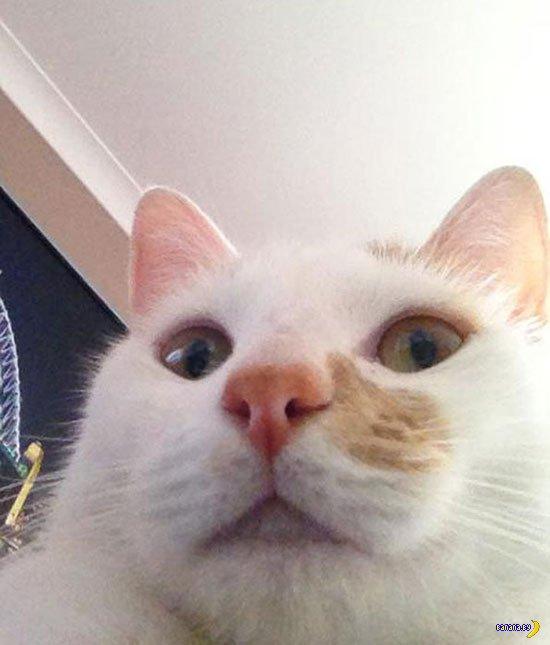Коты делают selfie