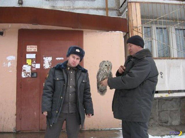 А тем временем в России - 20