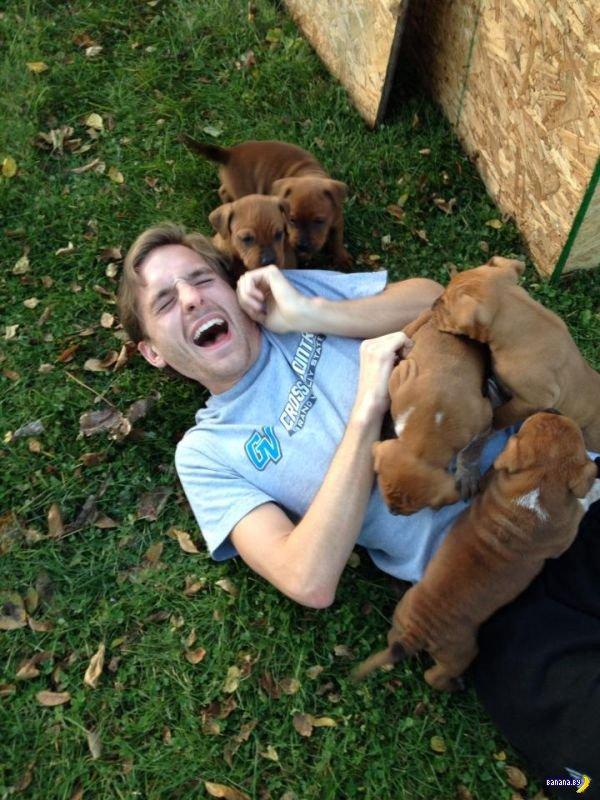 Последствия нападения пяти собак