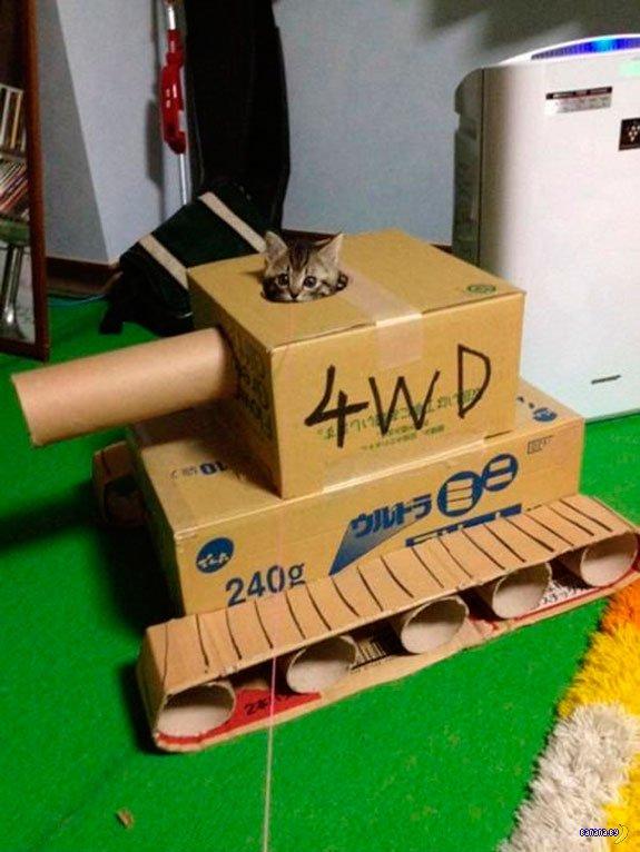 Коты готовятся к войне
