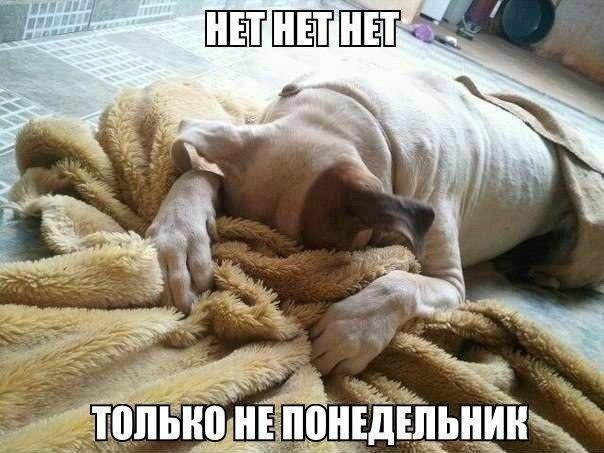 Анекдоты дня 05.05.2014