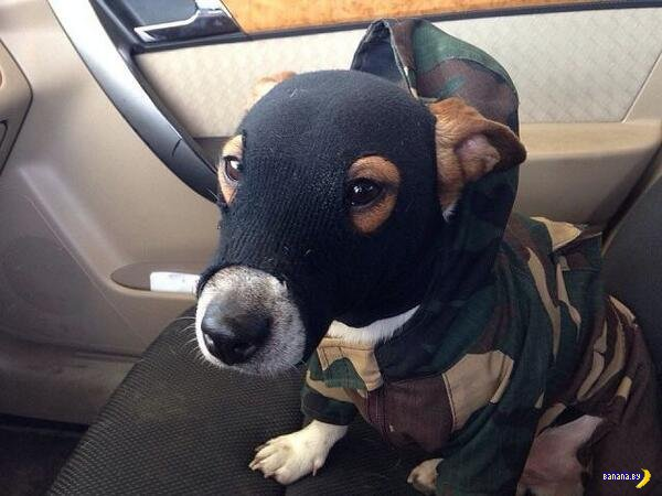 Сепаратисты - животные!