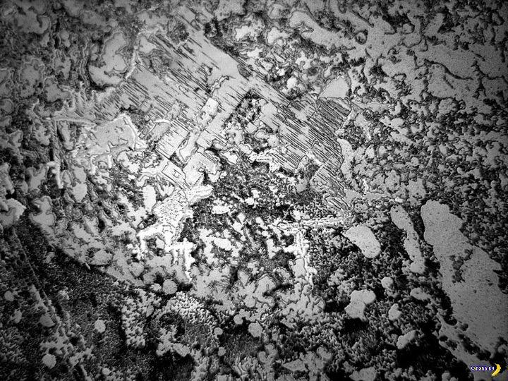 Слезы под микроскопом