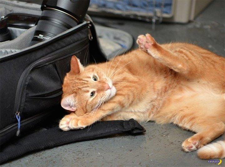 Факты про кошек, которые вы не знали