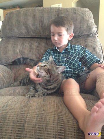 Отважный кот спас ребёнка от собаки