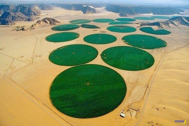 Урожай из пустыни