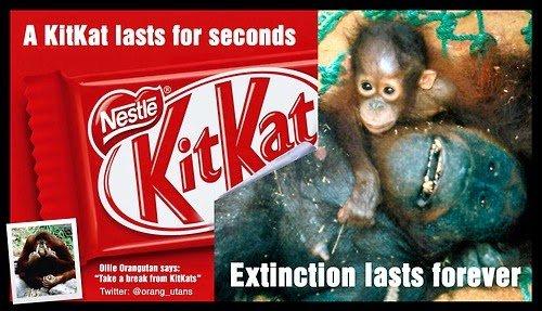 Как убивают ради пальмового масла
