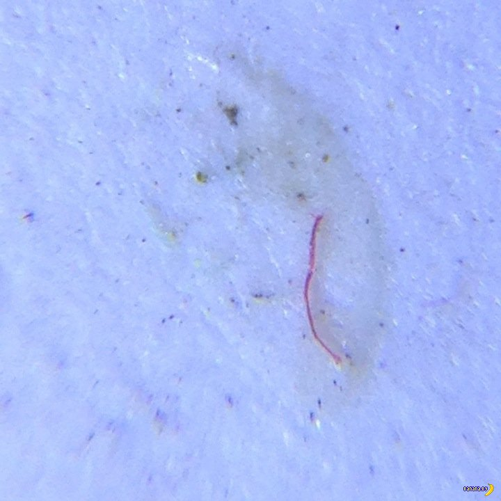 Tinydeal: микроскоп для смартфона!
