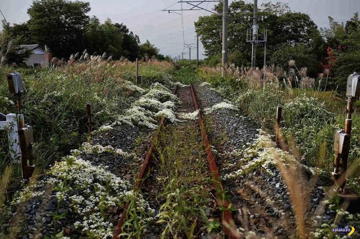 Заброшенные города около Фукусимы
