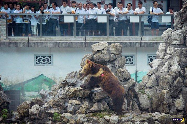 Учения с мишками в Китае