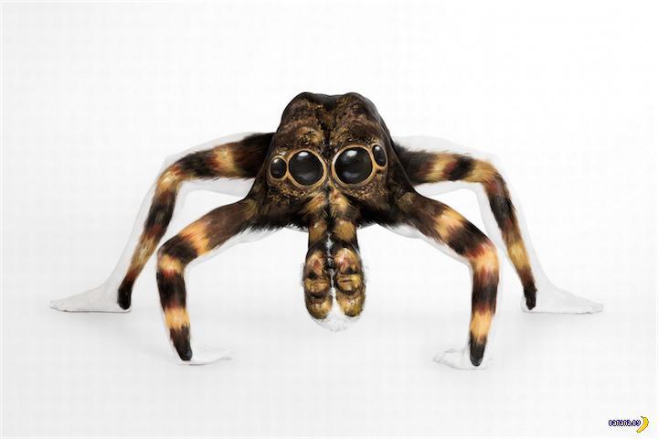 Сам ты паук!
