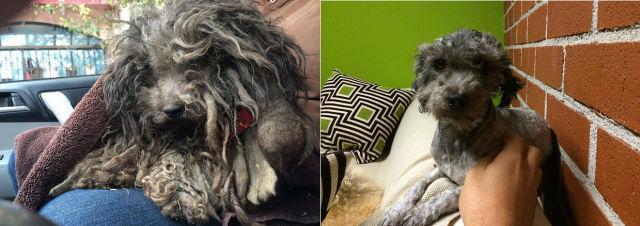 Истории собакенов