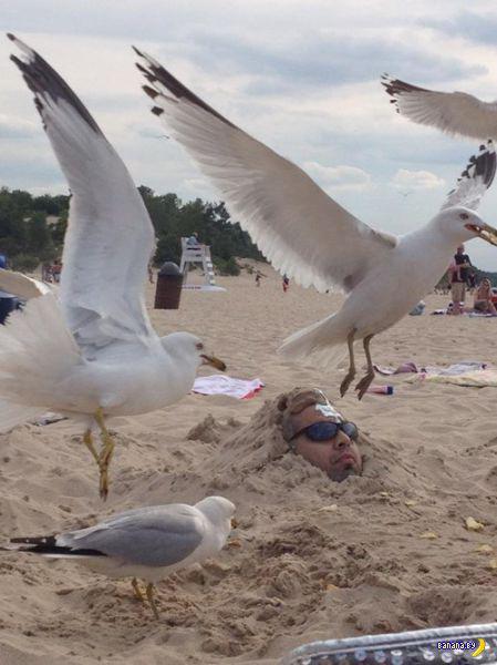 Пляжные странности