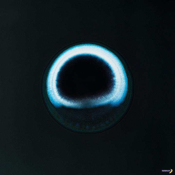 Вещества под микроскопом