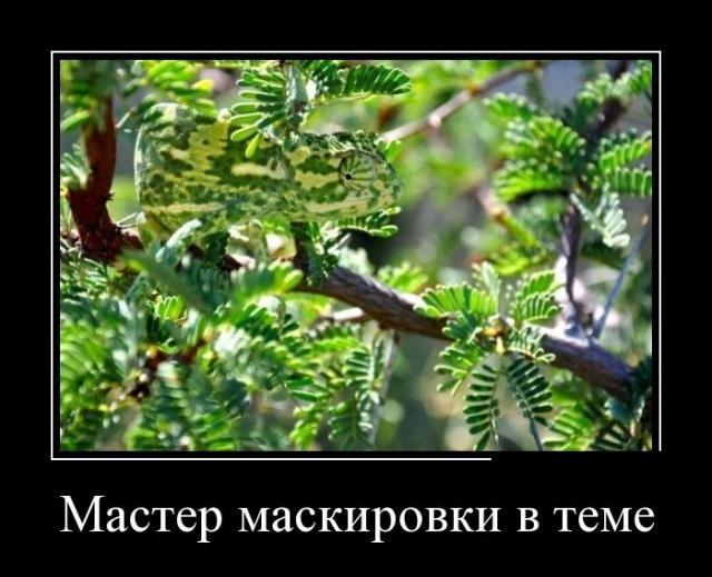 Демотиваторы - 259