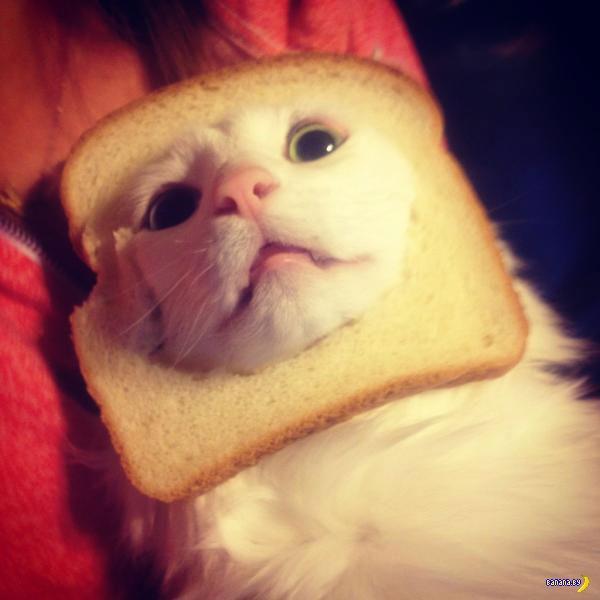 Хлебные коты до сих пор в моде