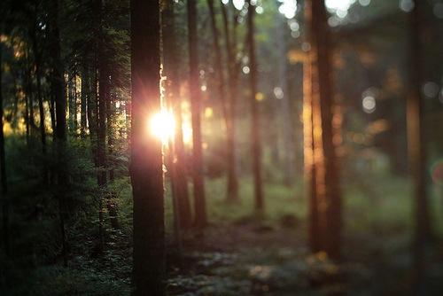 Россыпь красивых фотографий - 41
