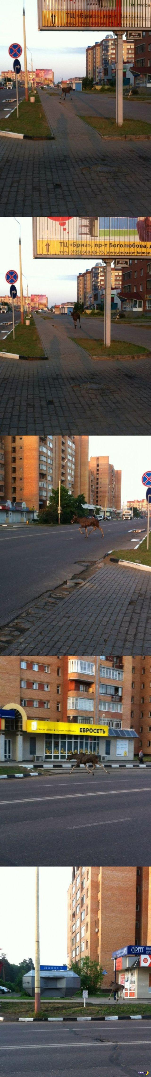 А тем временем в России - 26