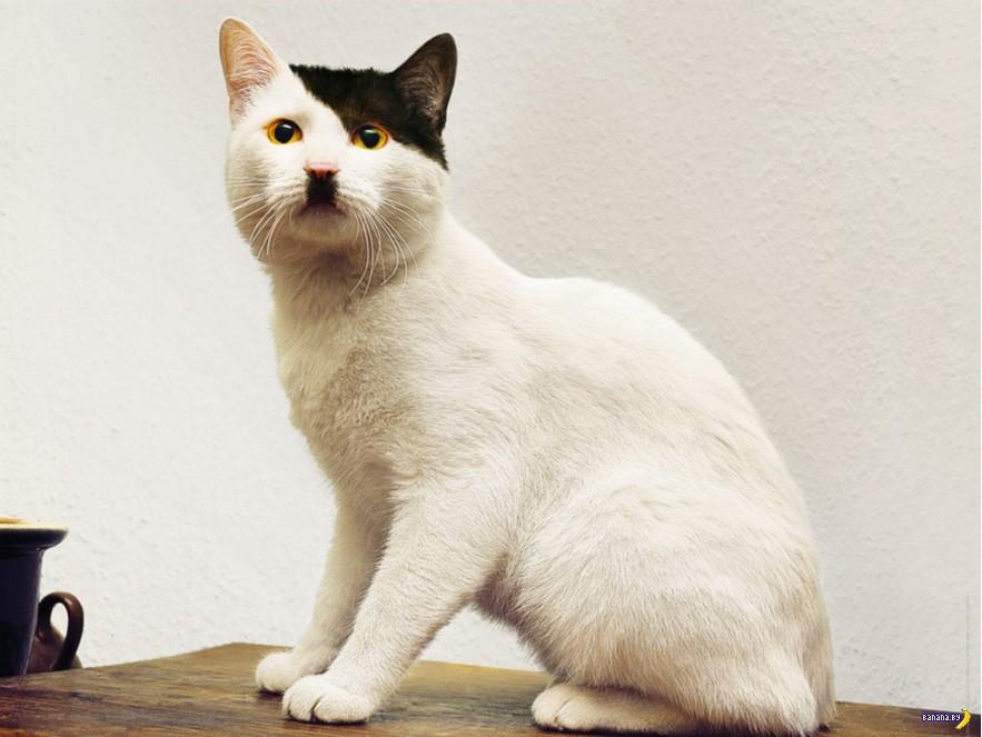 Угадайте имя кота?
