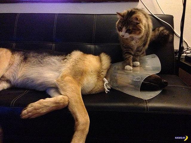 Зверюшки у ветеринара