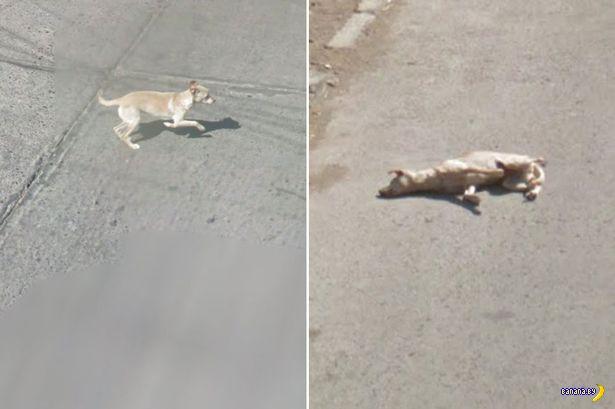 Гугломобиль убил собачку