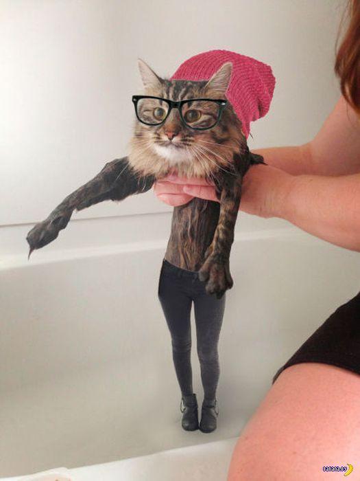 Мокренькая киска стала мемом и фотожабой