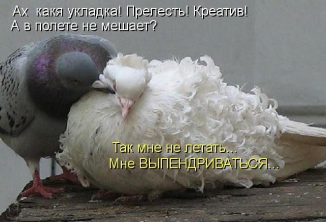 Анекдоты дня 25.08.2014