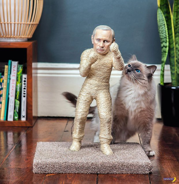 Коты унижают диктаторов