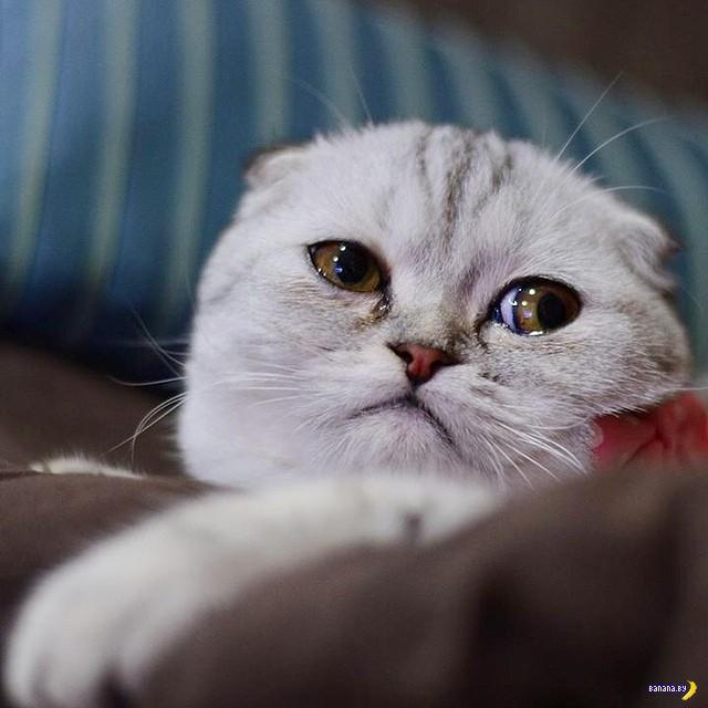 Обнаружен самый несчастный кот в мире