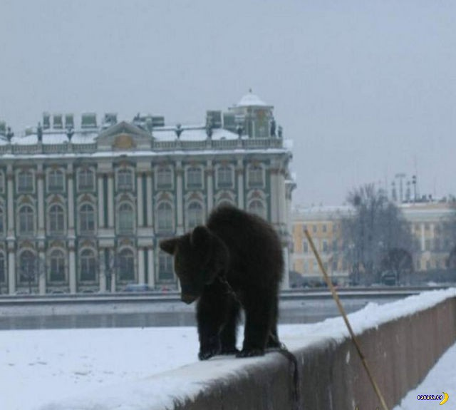 И медведи с балалайками