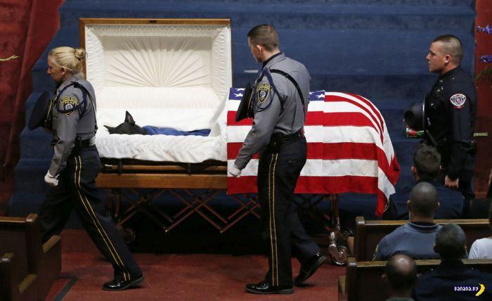 И похоронят как собаку