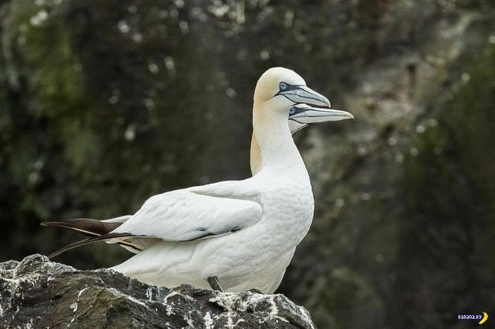 Как птицы своим guano половину острова похоронили