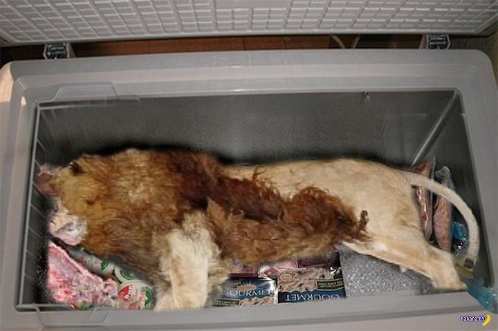 В морозильнике ресторана обнаружили труп льва