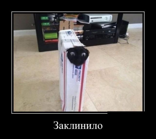Демотиваторы - 294
