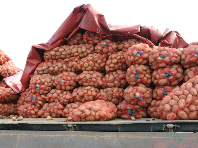 Картошка и врывается на минские дворы