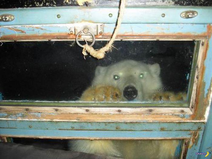 Открывай, сова! Медведь пришел!