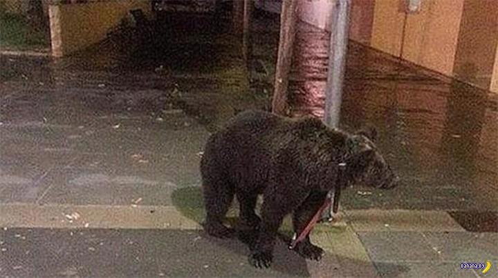Про медведей на улицах