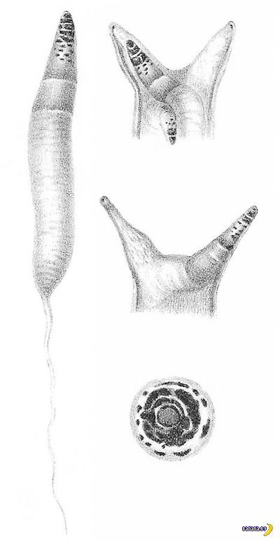 Коварный червяк делает из улитки диско-зомби