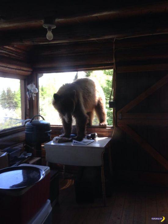 Превед, медвед!