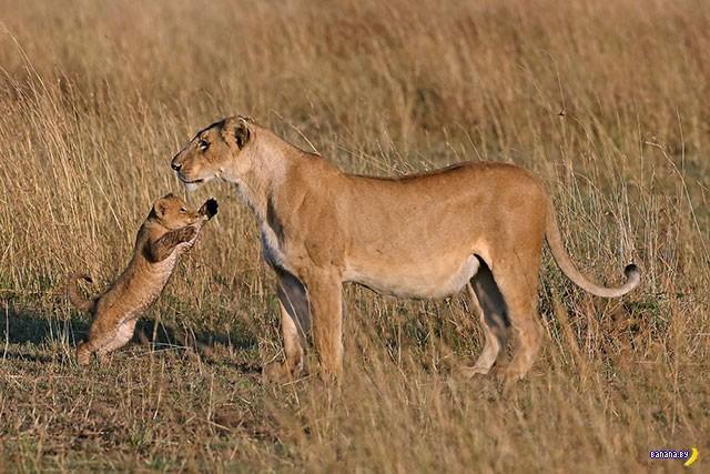 Трогательные зверята